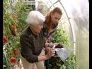 Выращивание томатов без полива - уДачные советы!