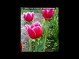 «Цветы-мои фото» под музыку Лара Фабиан - You and I. Picrolla